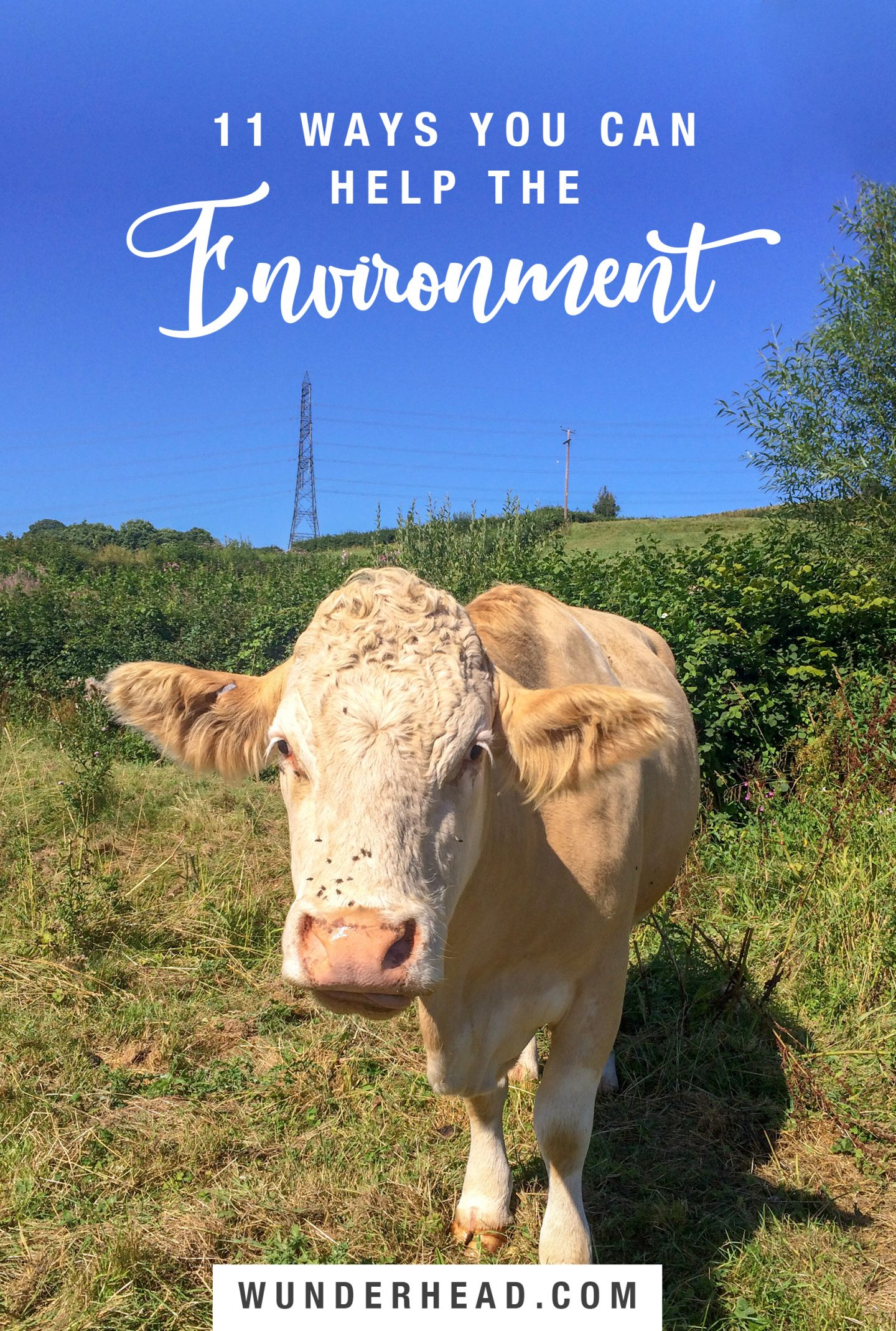 environment pinterest